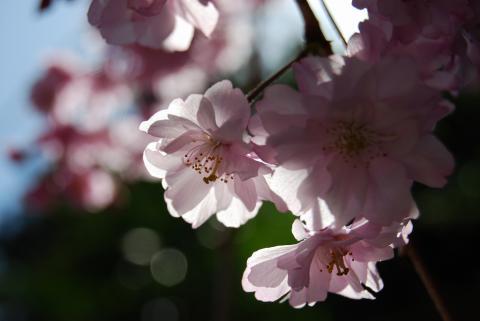 高開春の花10