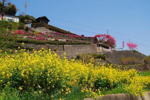 高開春の花11
