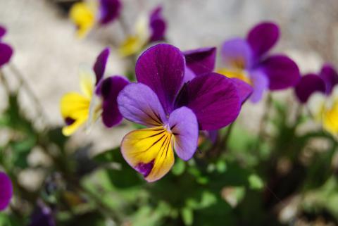 高開春の花12
