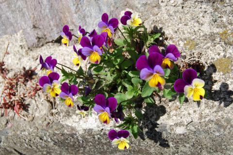 高開春の花17