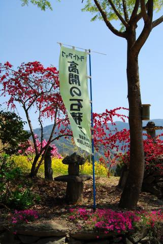 高開春の花19