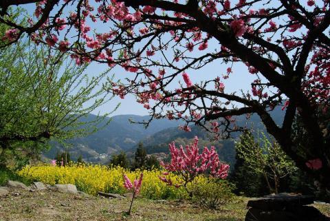 高開春の花20