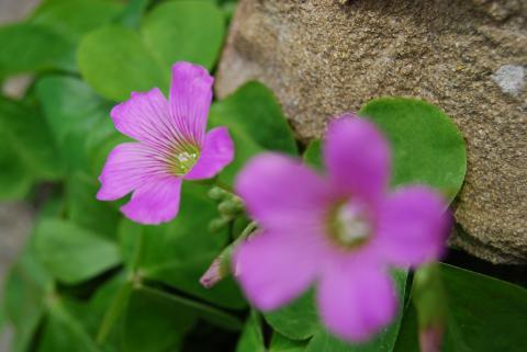 季節の花6