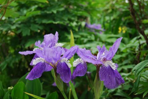 季節の花11