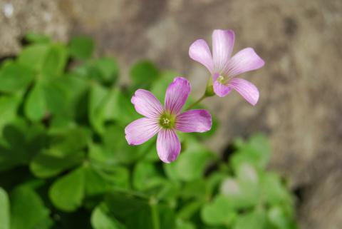 季節の花14