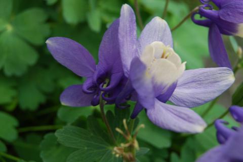 季節の花16