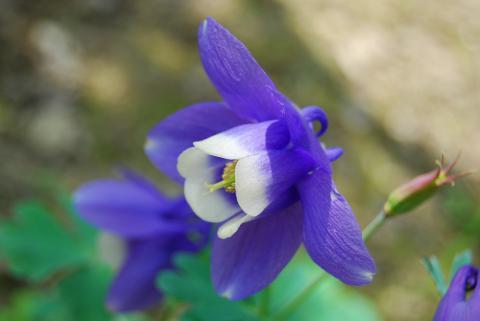 季節の花19