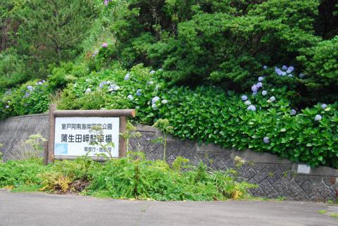 蒲生田岬2