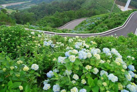 大川原高原1
