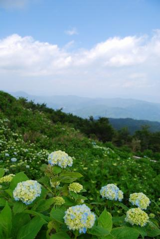 大川原高原4