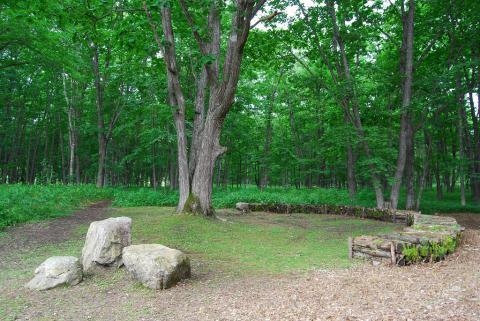 千年の森25
