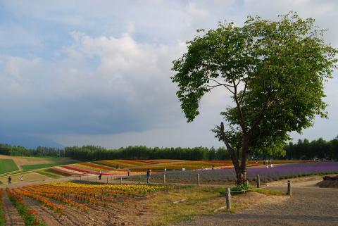 四季彩の丘26