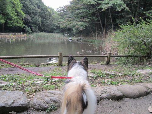 池とアリサ