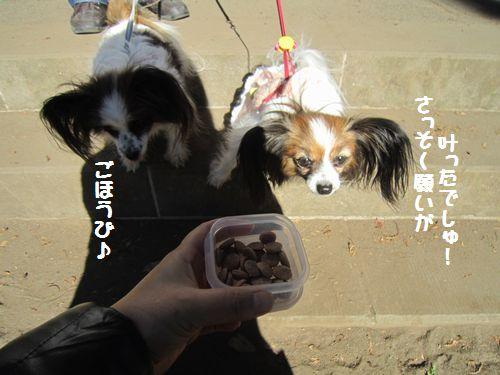 IMG_2182き