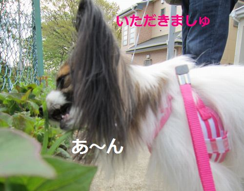 IMG_0144a.jpg