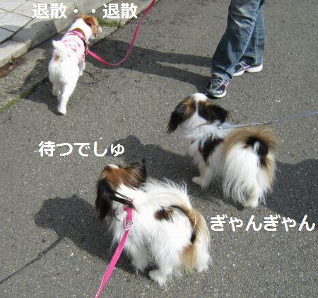 IMG_0226a.jpg