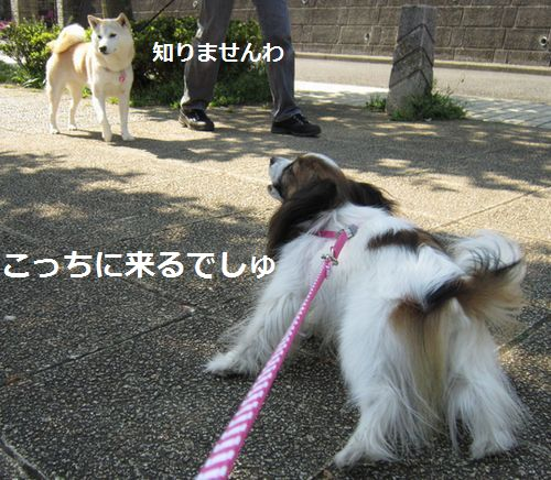 IMG_0307b.jpg