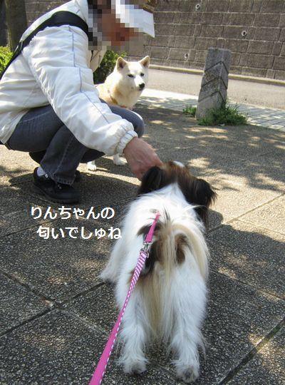 IMG_0308b.jpg