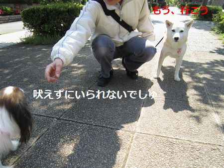 IMG_0311b.jpg