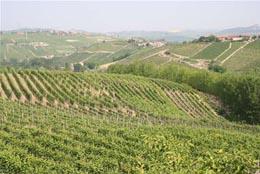 wine_image01.jpg