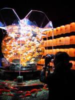 201109 金魚2
