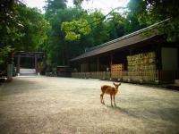 2011 夏 奈良の鹿