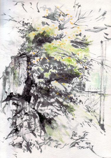 柿の木2 for blog