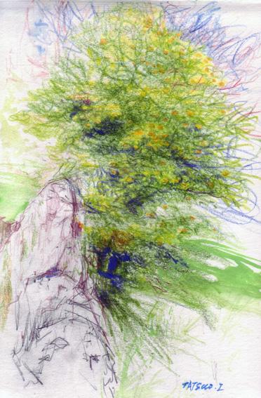 正丸の柿の木 for blog