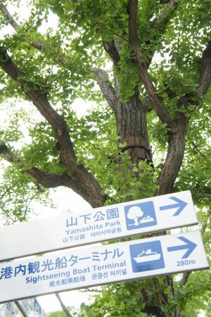 山下公園4