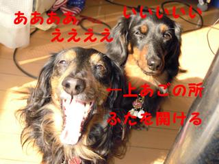 sutakato.jpg