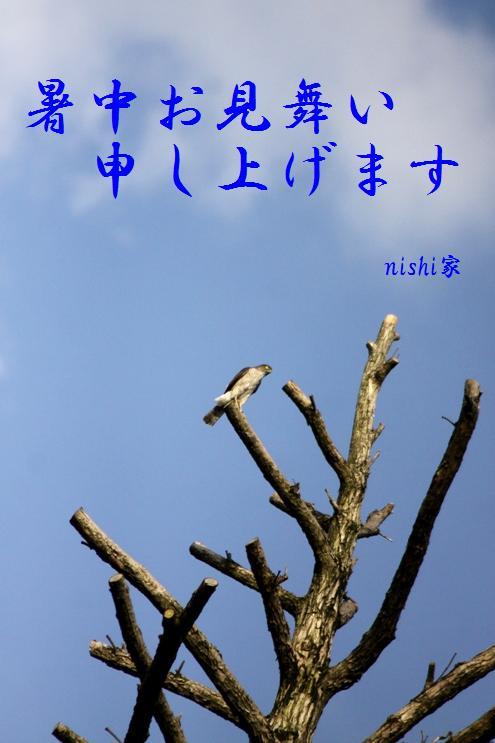 コピー ~ IMG_1612