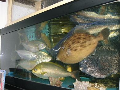 小さな水族館♪