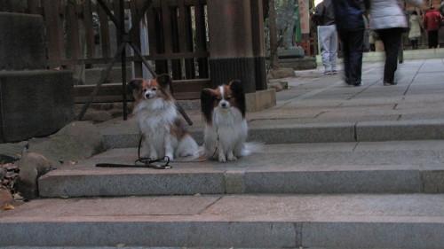 2010-01-01・元朝詣り1