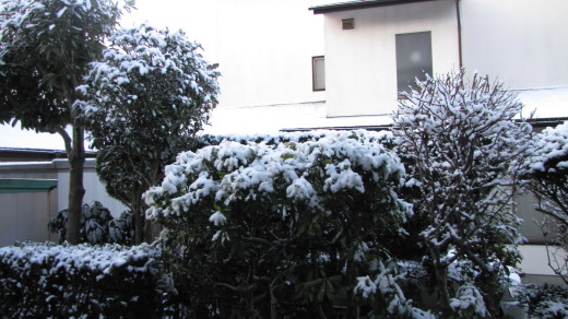 2010-02-04・朝の積雪