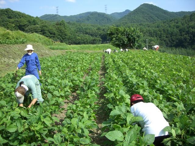 山梨農業バイト