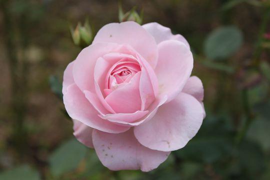 23 花ぼんぼり