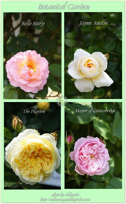 bz5-er roses