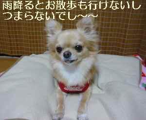 blog2009102603.jpg