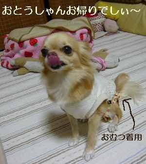 blog2009102703.jpg