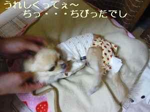 blog2009102704.jpg