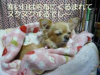 blog2009110202.jpg
