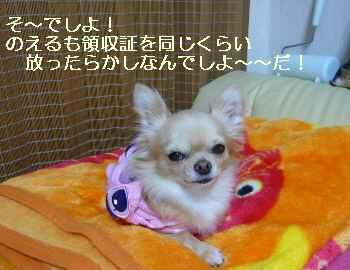blog2009110501.jpg