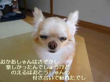 blog2009110803.jpg