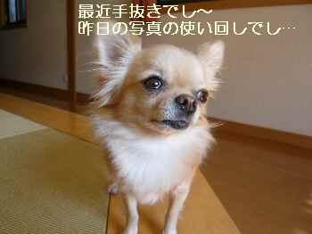 blog2009110901.jpg
