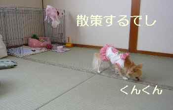 blog2009111502.jpg