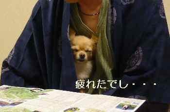 blog2009111504.jpg