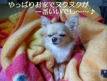 blog2009111603.jpg