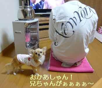 blog2009111803.jpg