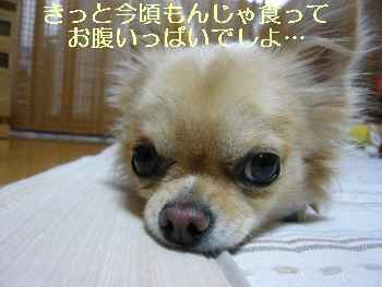 blog2009111901.jpg