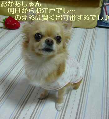 blog2009111903.jpg
